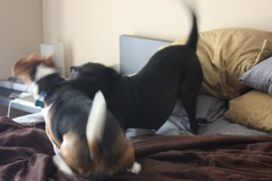 Bagel and Buckley Playing